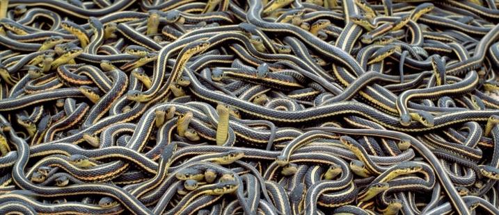 narciss-snake-pits-wtf-1600x856